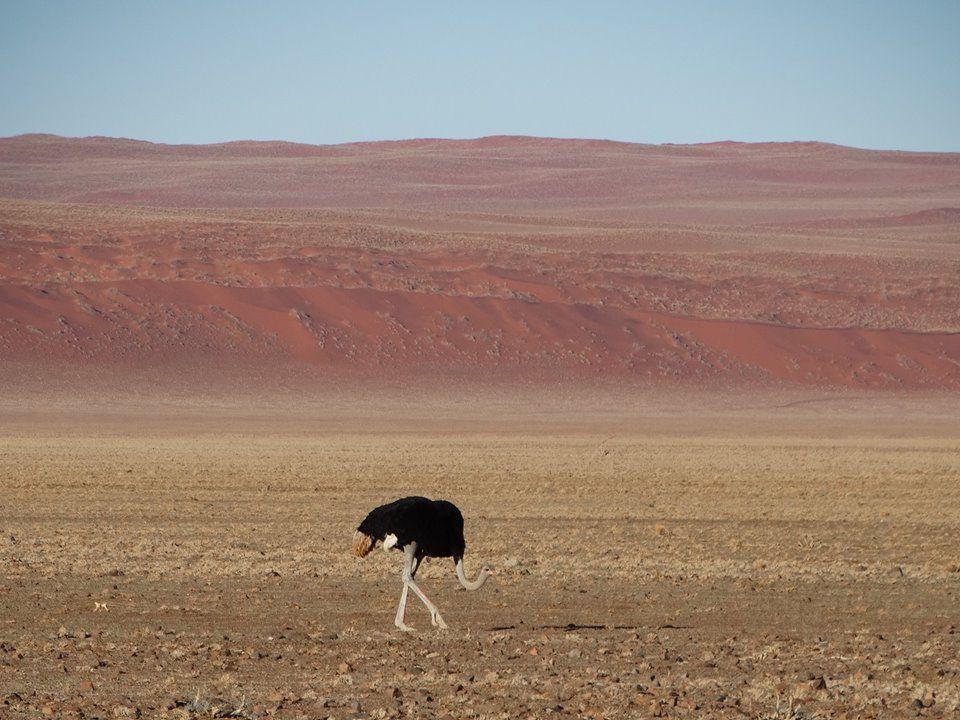 alexis-beard-viaje-namibia-espanol